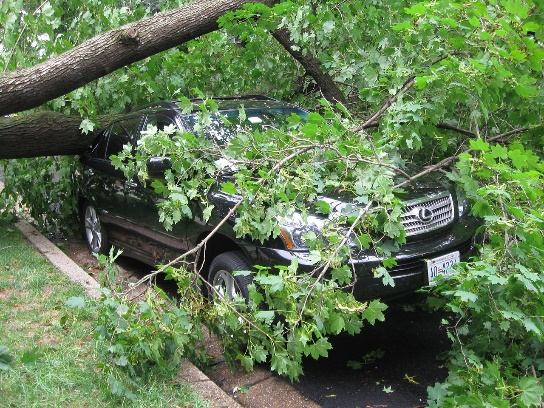 When a Tree Falls Into Your Yard… Do You Clean It Up?