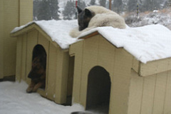 Can You Leave Your Pet Outside When It Gets Cold?